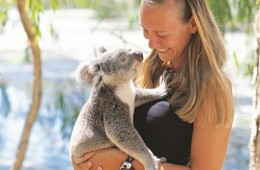 "If your wanting a cuddly thing to do in Townsville, try ""Billabong Sanctuary"" and hold a koala. An all Australian zoo."